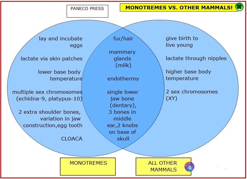 Monotremes vs other mammals a handy venn diagram paneco naturalists 0 comments ccuart Gallery